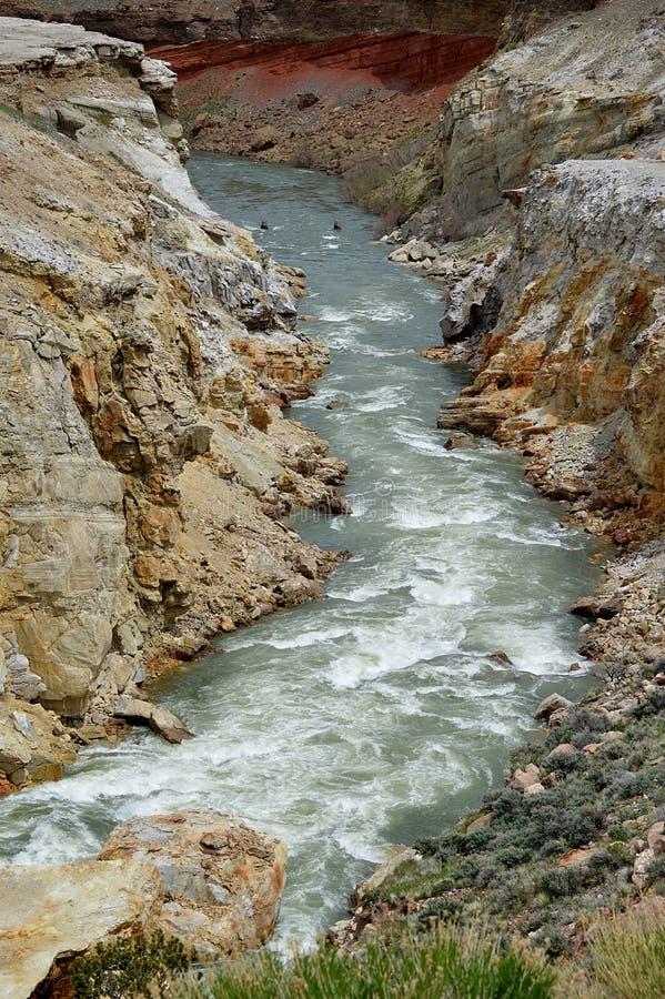 Río del cañón del Shoshone, Wyoming foto de archivo libre de regalías