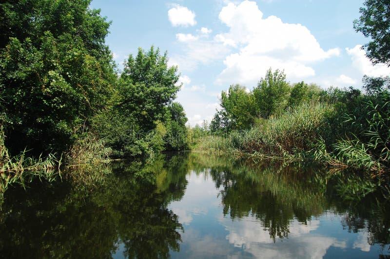 Río del terreno de aluvión del verano con las selvas de cañas y de árboles fotografía de archivo libre de regalías