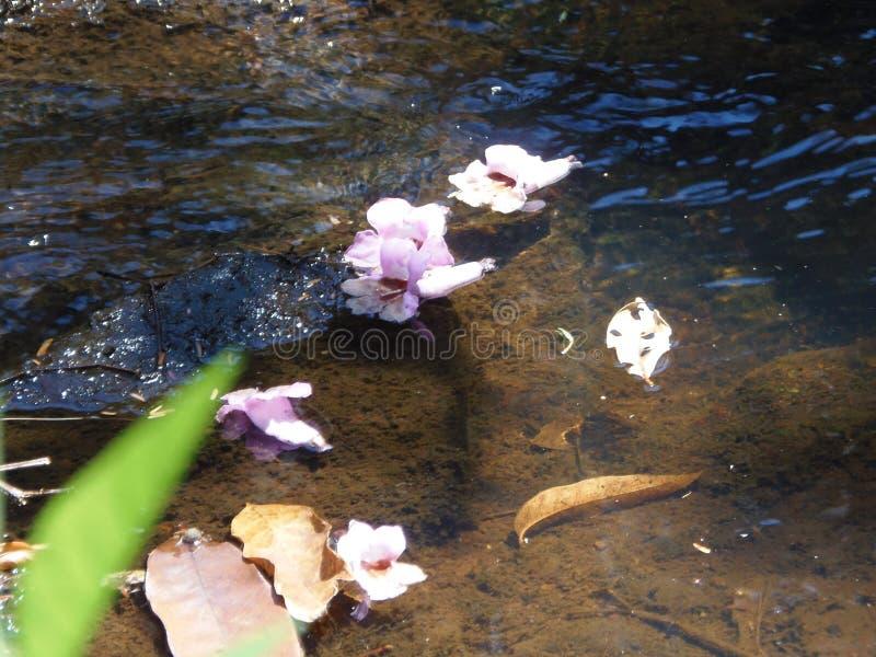 Río e Flores foto de archivo libre de regalías