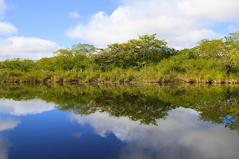 Río en Belice, América foto de archivo