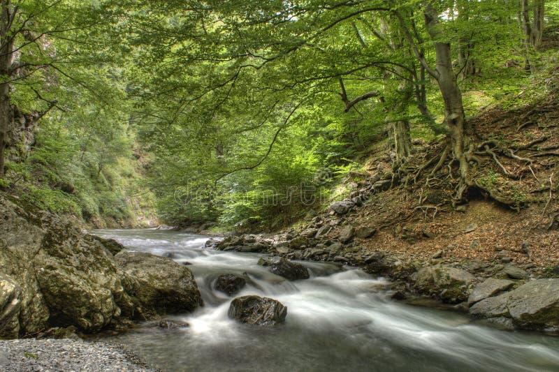 Río en bosque fotos de archivo libres de regalías
