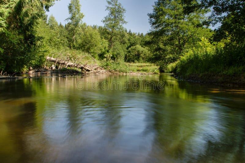 Río en bosque bielorruso fotos de archivo libres de regalías