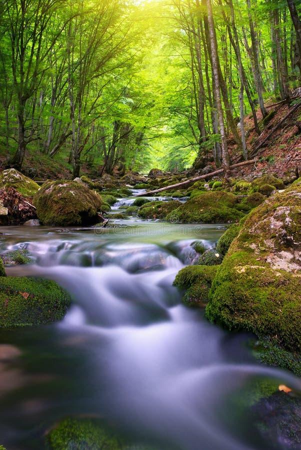 Río en bosque de la montaña. fotografía de archivo