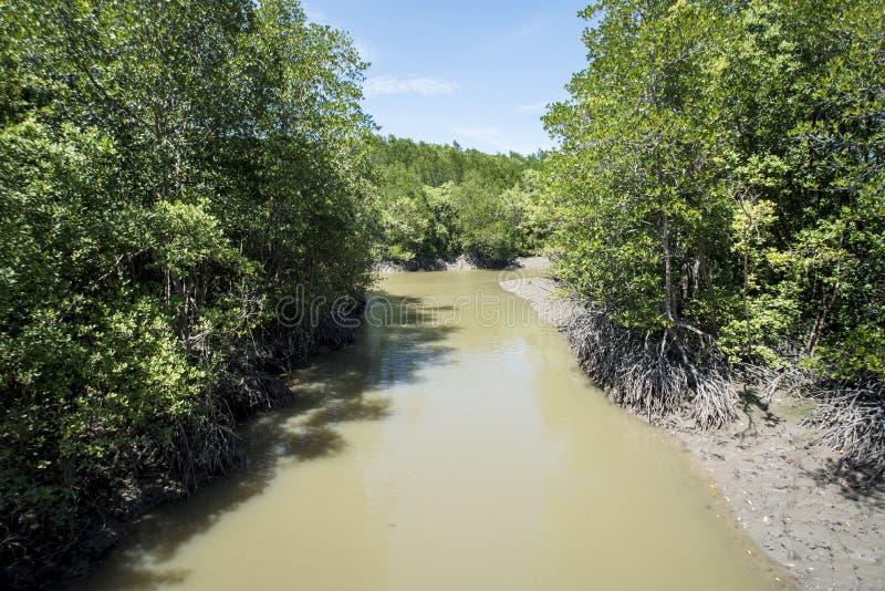 Río en el mangle en la isla del mono del ` s del Gio de la poder fotografía de archivo