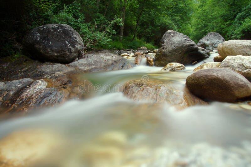 Río en el mesón de Toscana el bosque imagen de archivo libre de regalías