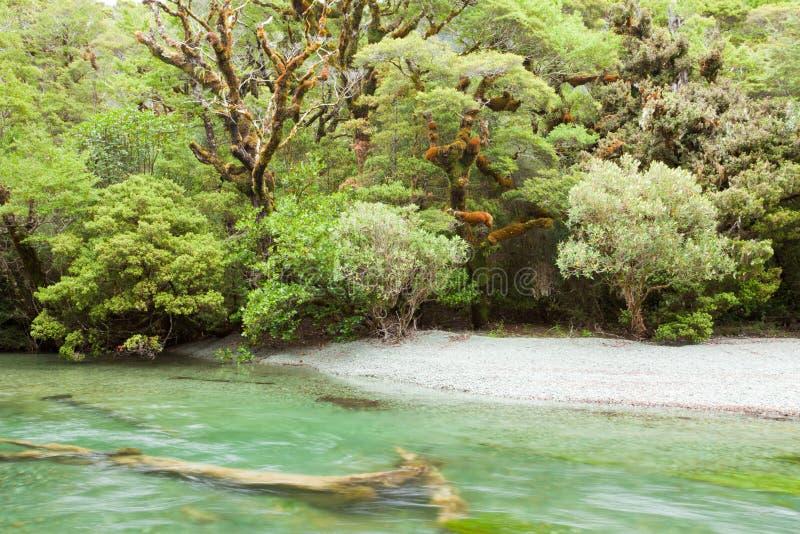 Río en el yermo de la selva tropical de Fiordland NP NZ imágenes de archivo libres de regalías