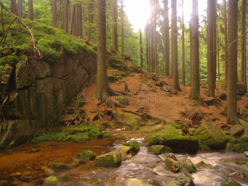 Río en Karkonosze foto de archivo libre de regalías