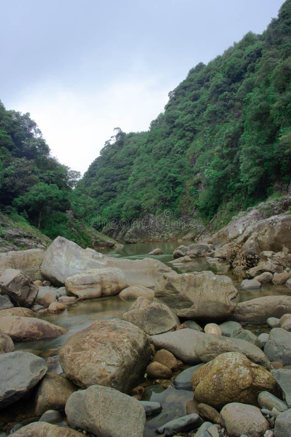 Río en los bosques tropicales foto de archivo
