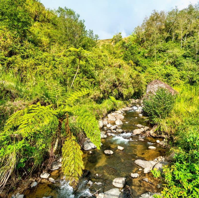Río en terrazas del arroz de Banaue - isla de Luzón, Filipinas foto de archivo libre de regalías