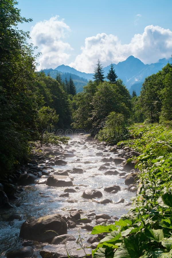 Río en un bosque fotografía de archivo