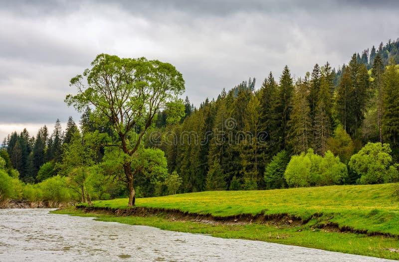 Río entre el bosque en montañas cárpatas pintorescas en su imagen de archivo