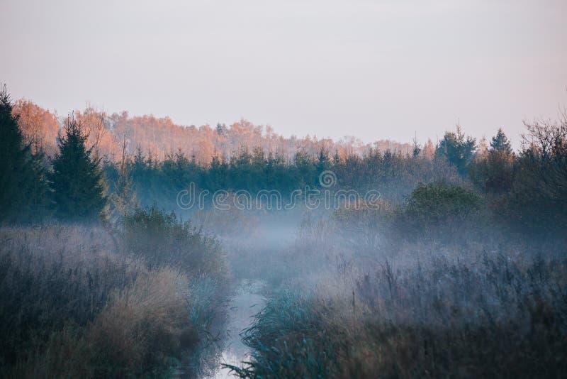 Río estrecho rodeado por el bosque, cubierto en niebla, con la hilera de árboles en el bakcground tocado por salida del sol del o fotos de archivo libres de regalías