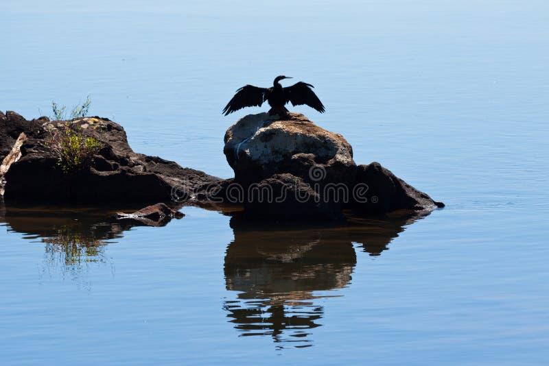 Río la Argentina de Iguassu del perfil del pájaro fotos de archivo libres de regalías