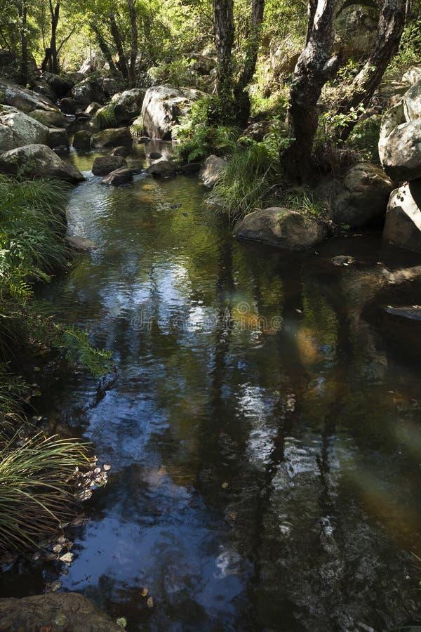 Río natural imagen de archivo