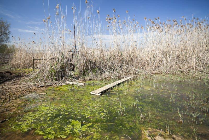 Río natural de Llobregat del delta del área, cerca del EL Prat-Barc del aeropuerto foto de archivo libre de regalías
