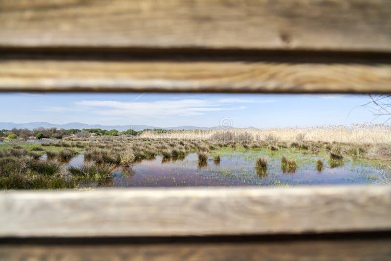 Río natural de Llobregat del delta del área, cerca del EL Prat-Barc del aeropuerto fotografía de archivo libre de regalías