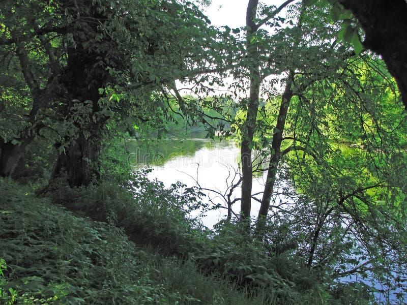 Río ocultado para las ramas de árboles fotografía de archivo