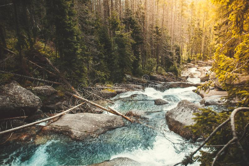 Río poderoso que atraviesa el bosque, Tatras imagen de archivo