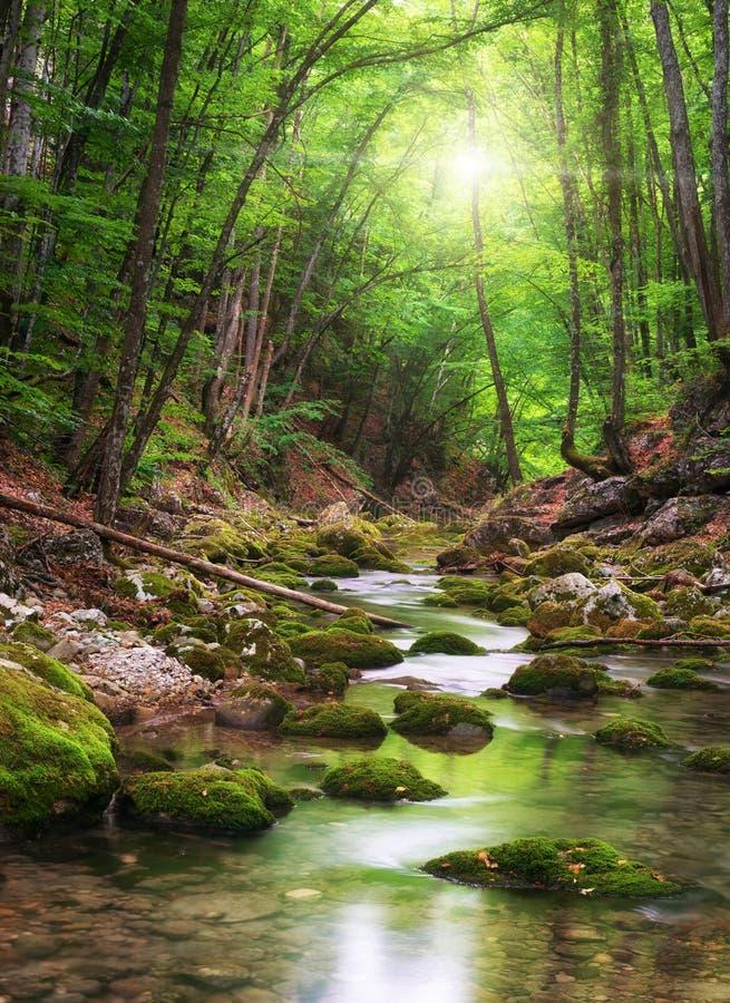 Río profundamente en bosque de la montaña fotografía de archivo