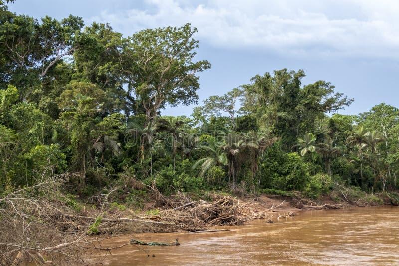 Río que flota a través de la selva tropical verde, Bolivia, parque nacional de Madidi en la hora de oro imagenes de archivo