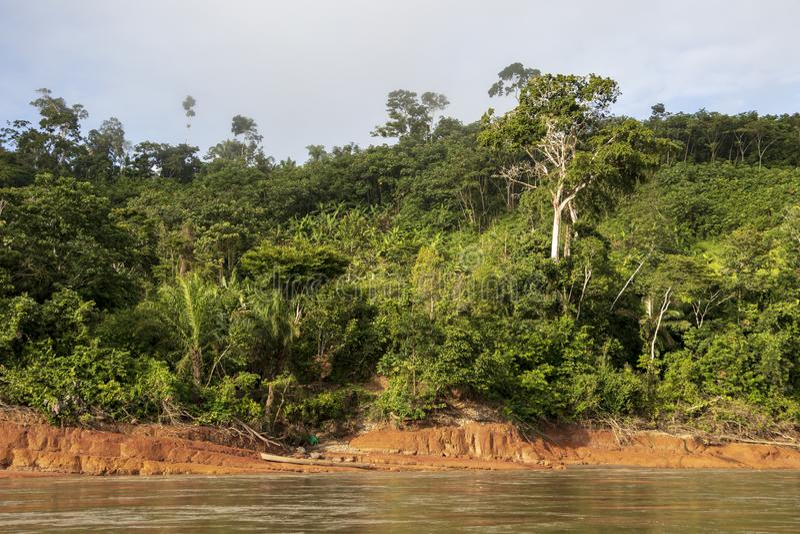 Río que flota a través de la selva tropical verde, Bolivia, parque nacional de Madidi en la hora de oro imágenes de archivo libres de regalías