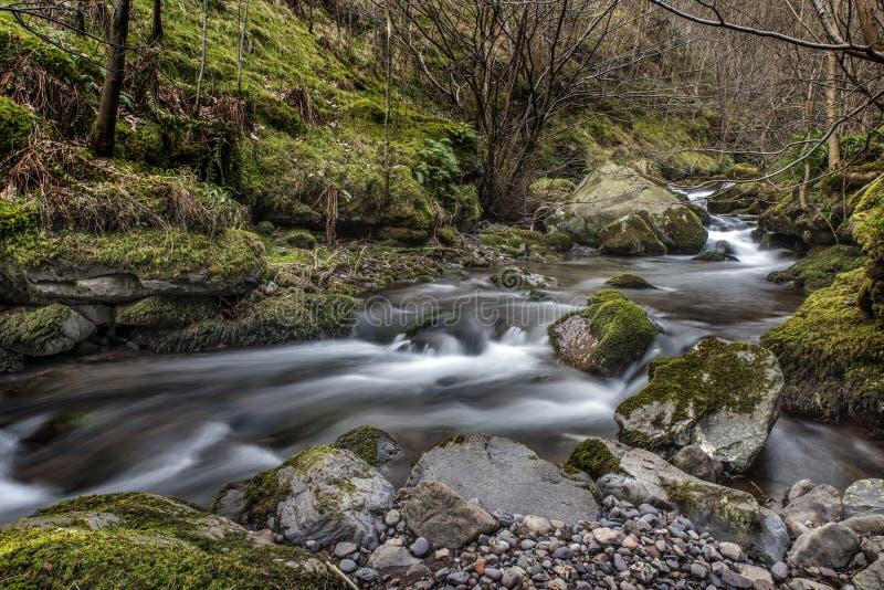 Río que fluye en Alva Glen, Escocia imágenes de archivo libres de regalías
