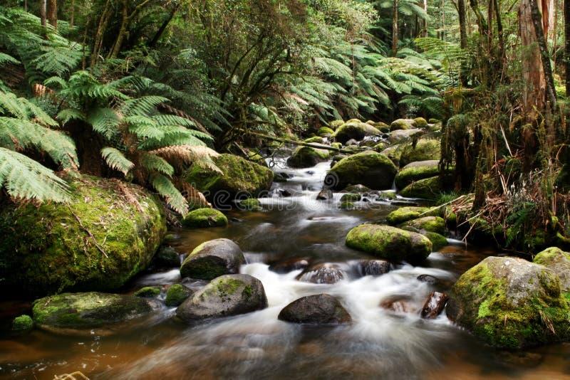 Río que se ejecuta sobre rocas cubiertas de musgo foto de archivo