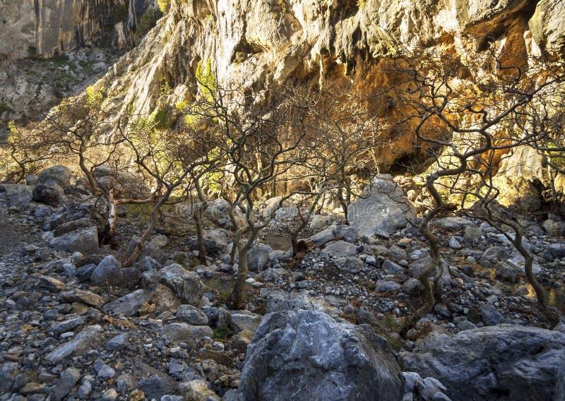 Río rápido montañoso con agua clara y árboles planos en el bosque en las montañas Dirfys en la isla de Evvoia, Grecia imagen de archivo