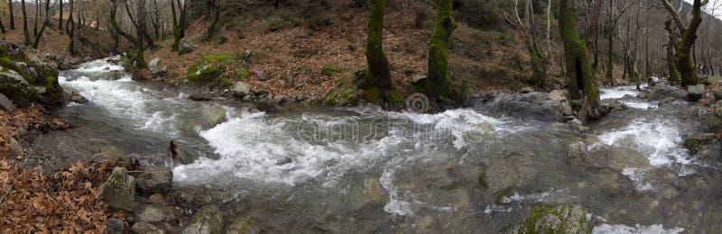 Río rápido montañoso de la visión panorámica con agua clara en el bosque en las montañas Dirfys en la isla de Evvoia, Grecia imagen de archivo