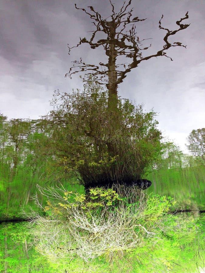 Río Reflextion imagenes de archivo