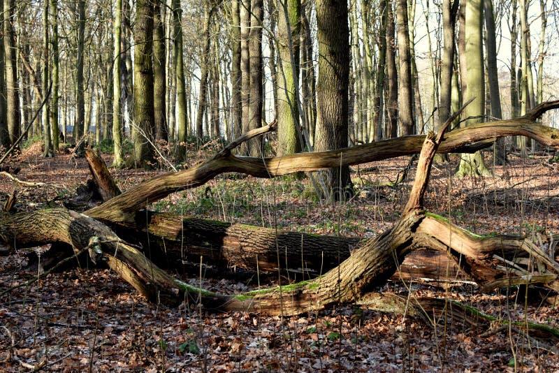 Río reservado del pequeño bosque del bosque del invierno Invierno fotografía de archivo