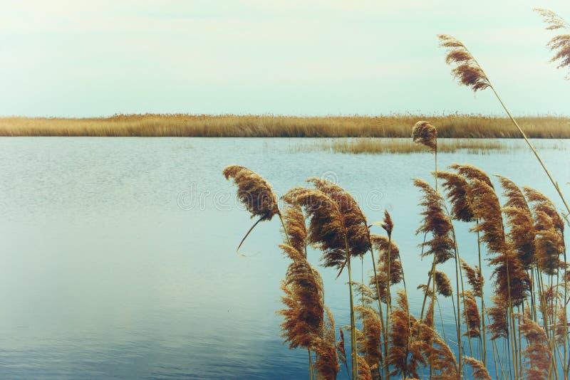 Río reservado del verano imagen de archivo libre de regalías
