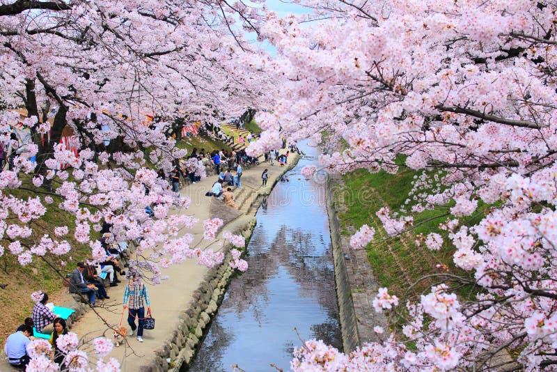 río Sakura-enmarcado fotos de archivo libres de regalías