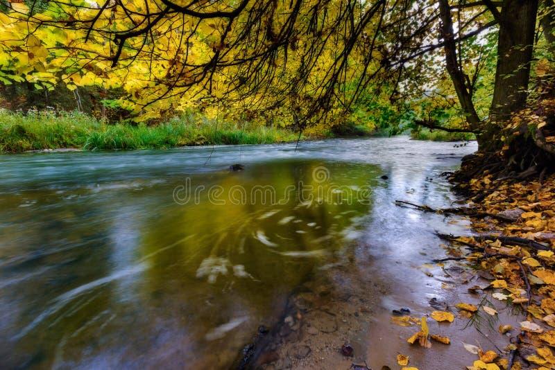 Río salvaje en bosque colorido otoñal imágenes de archivo libres de regalías