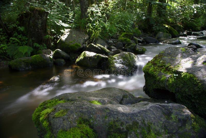 Río salvaje en el bosque del Ravennaschlucht foto de archivo