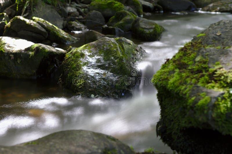 Río salvaje en el bosque del Ravennaschlucht foto de archivo libre de regalías