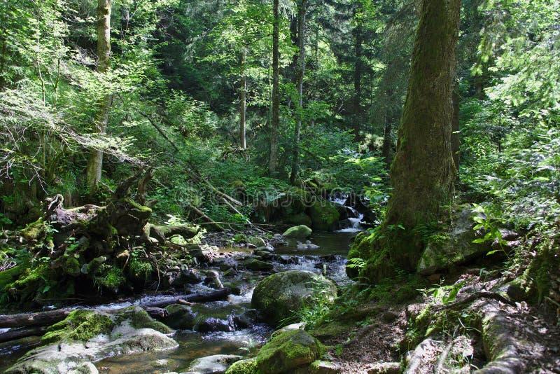 Río salvaje en el bosque del Ravennaschlucht fotos de archivo
