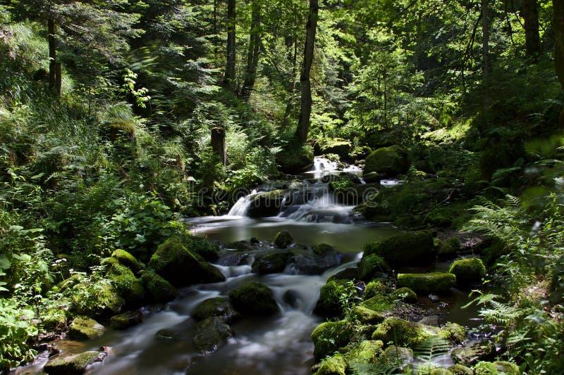 Río salvaje en el Ravennaschlucht en verano fotos de archivo