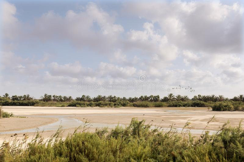 Río seco con las dunas y las palmeras de arena fotos de archivo libres de regalías