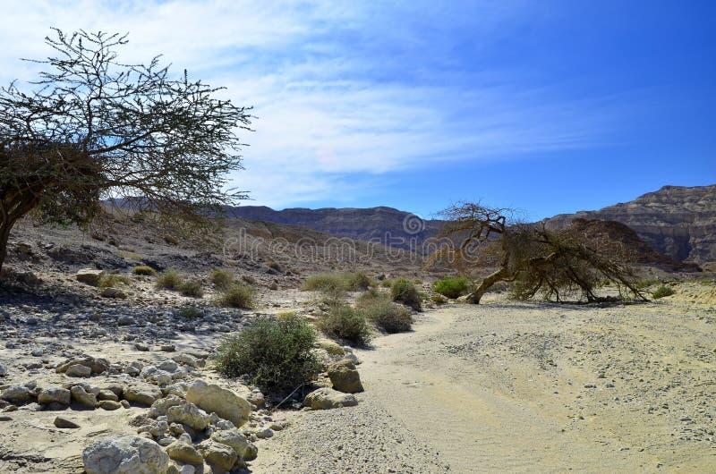 Río seco en el desierto del Negev, Israel imagen de archivo