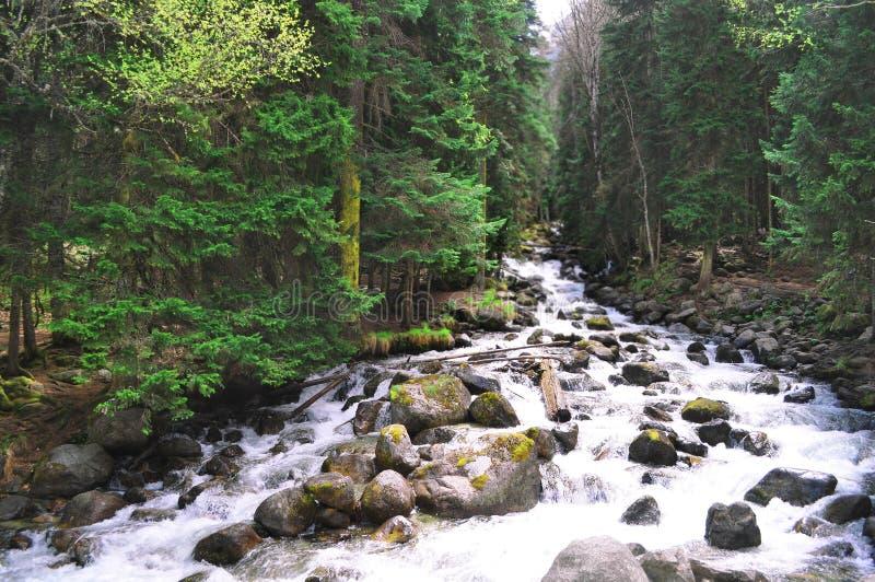 Río tempestuoso de la montaña con las rocas en la orilla imagenes de archivo