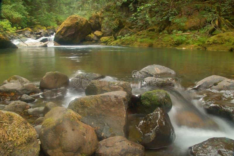 Río a través de un bosque foto de archivo libre de regalías