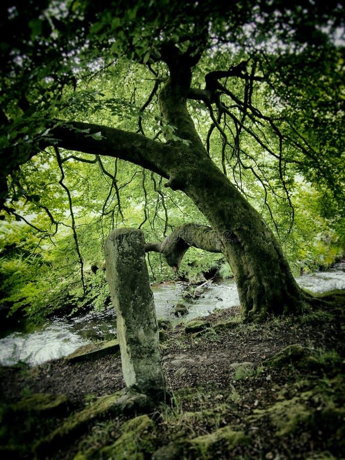 Río viejo del árbol y piedra derecha foto de archivo