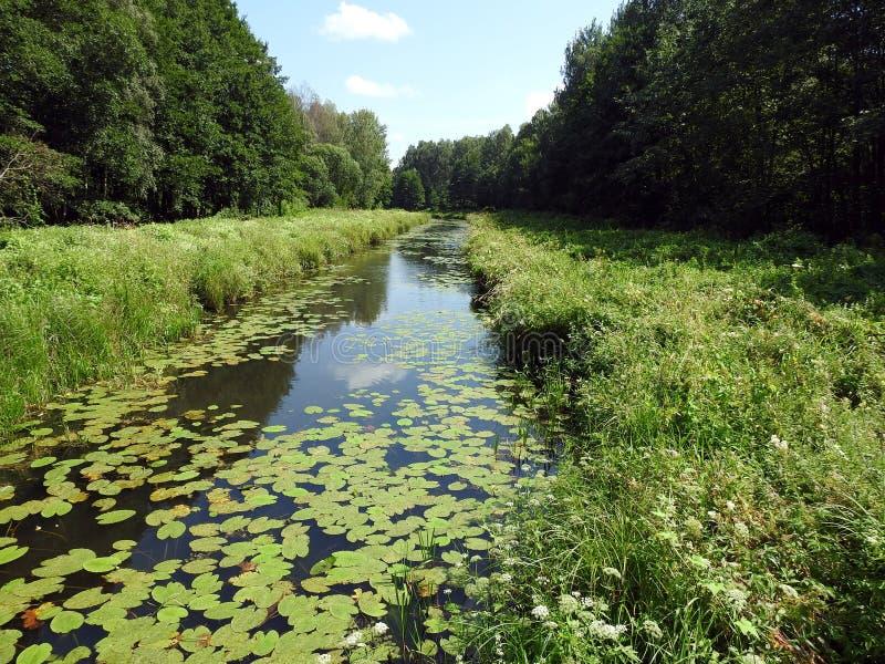 Río Vorycia, plantas verdes y cielo azul, Lituania imagen de archivo libre de regalías