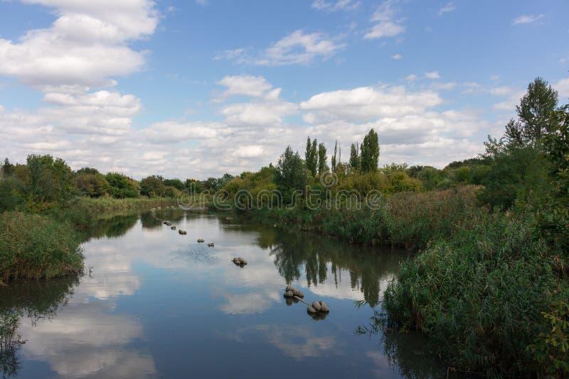 río y matorrales fotografía de archivo