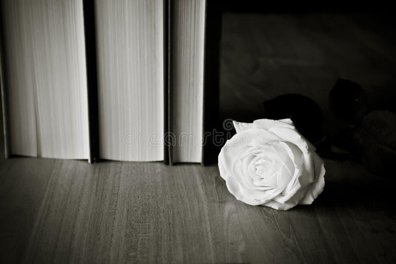 różę białe książki obrazy stock