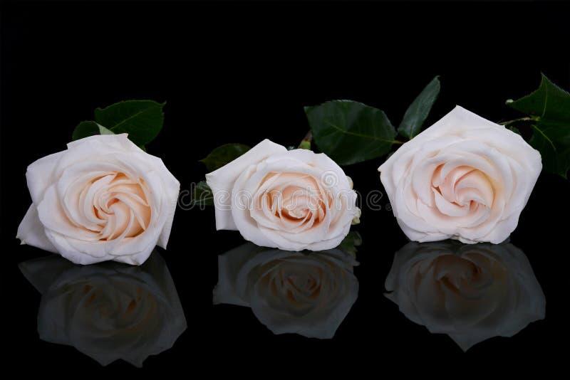róża czarny biel trzy zdjęcie stock