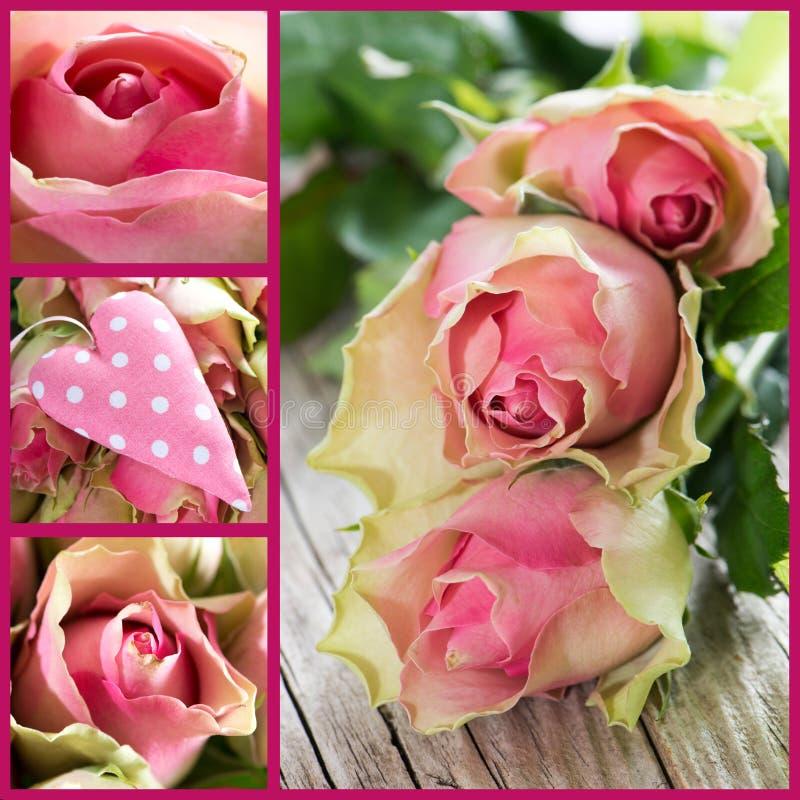 Róża kolaż obrazy royalty free
