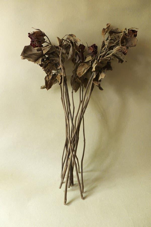 Róża spadek obrazy stock