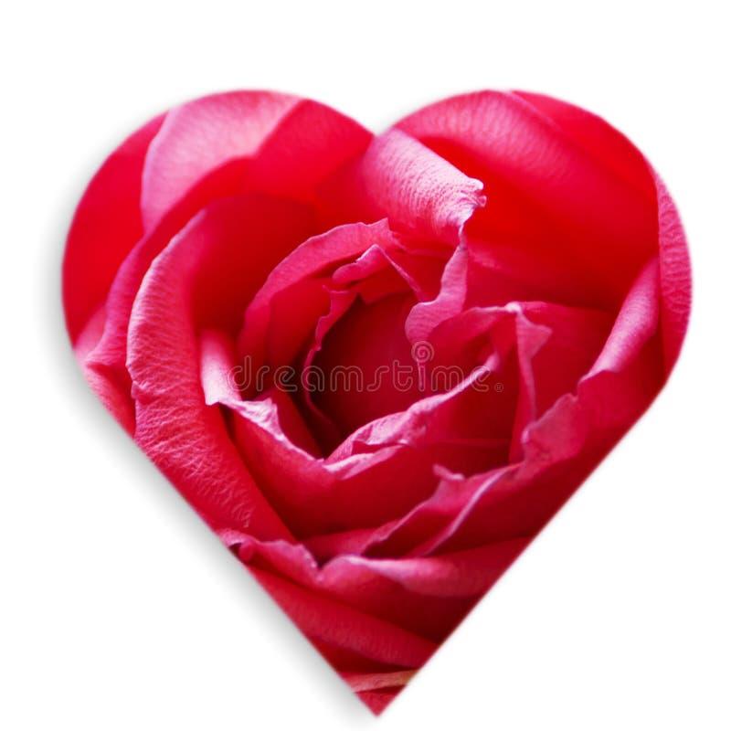 Róża w sercu ilustracja wektor